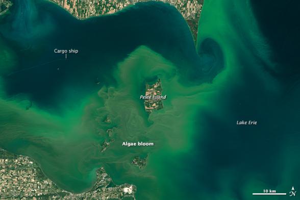 toxic algae on Lake Erie, as seen by the Landsat 8 satellite
